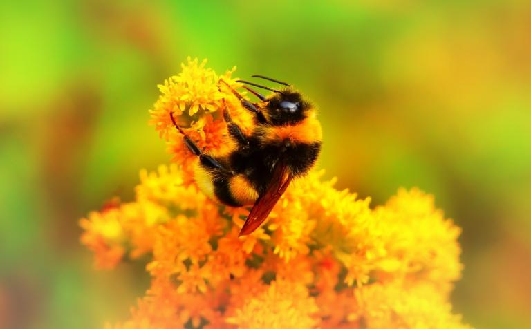 Bienenvolk kaufen