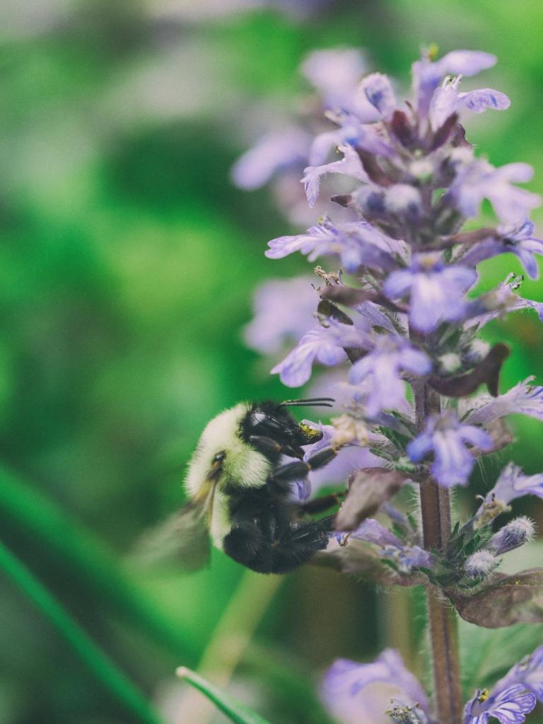 Bienenvolk kaufen - was ist zu beachten